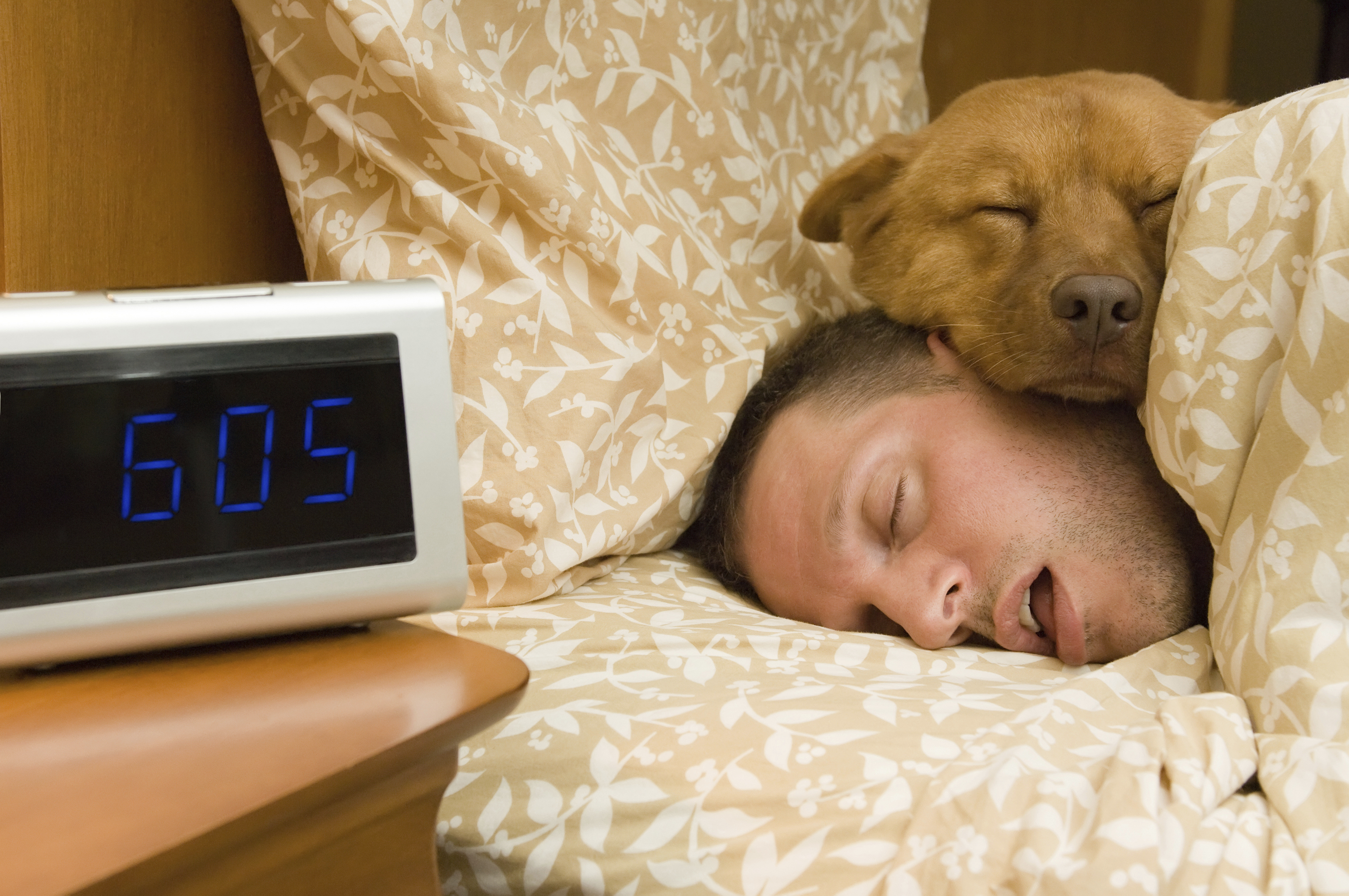 Pets may contribute to insomnia