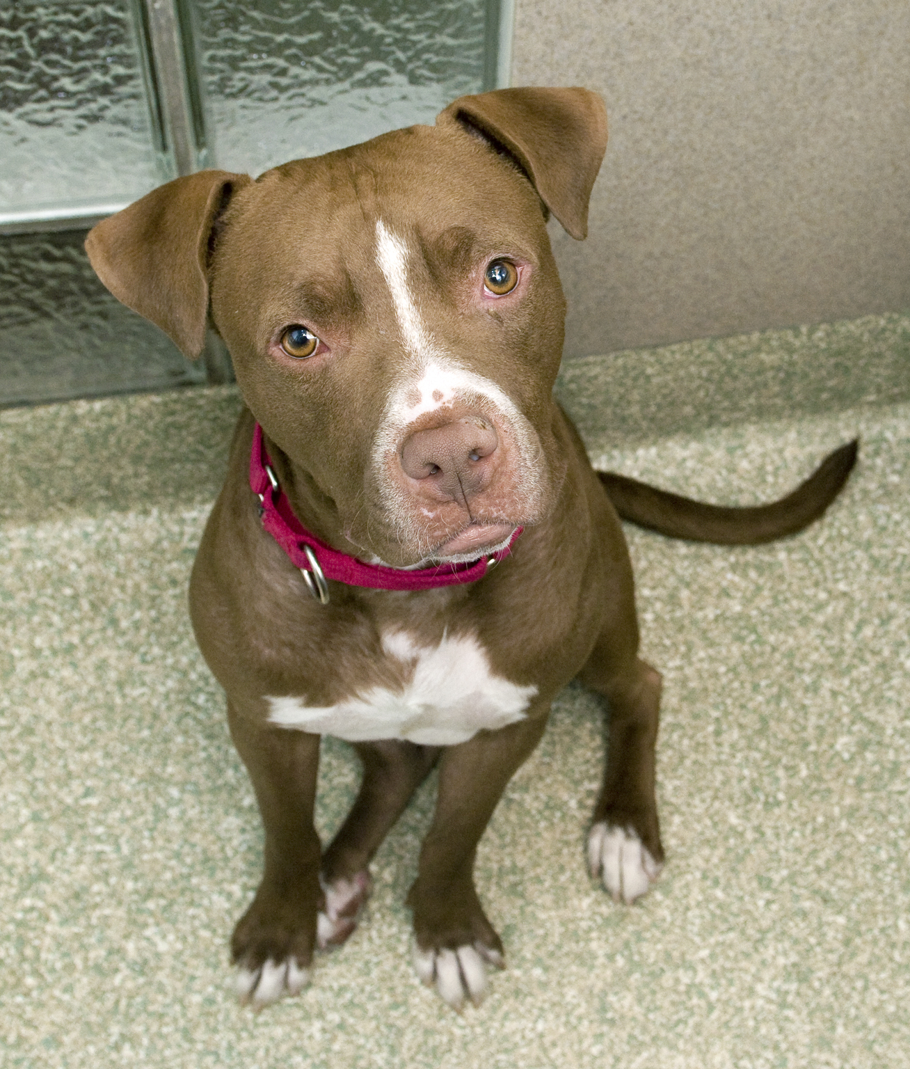 Pet of the Week: Confetti