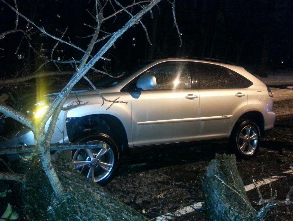 A large tree fell across Massachusetts Avenue near Macomb Street in NW D.C. on 3/1/2015. (WTOP/Rahul Bali)