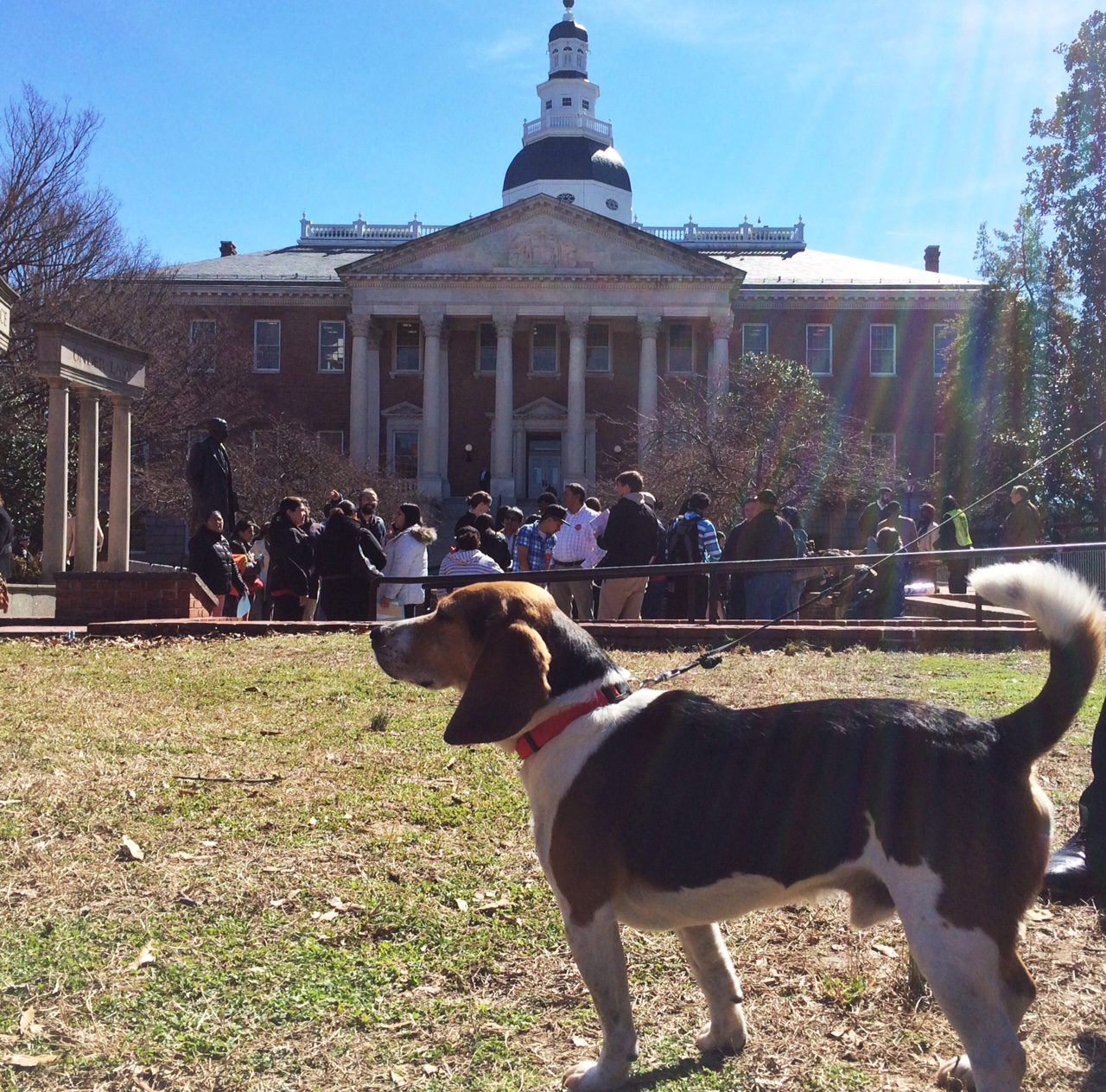 Beagles lobby on the lawn of Md. statehouse