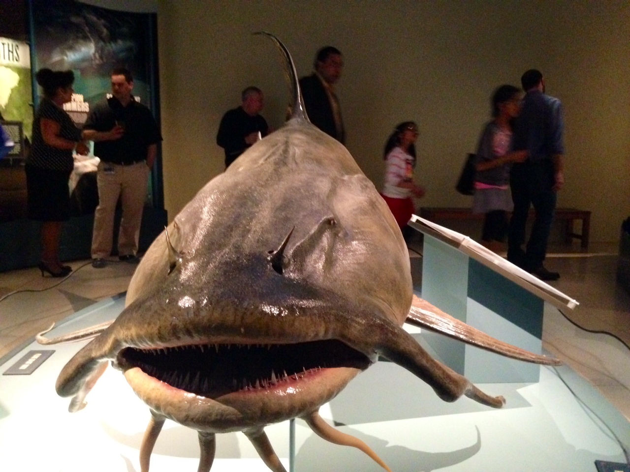New museum exhibit highlights monster fish (Photos)