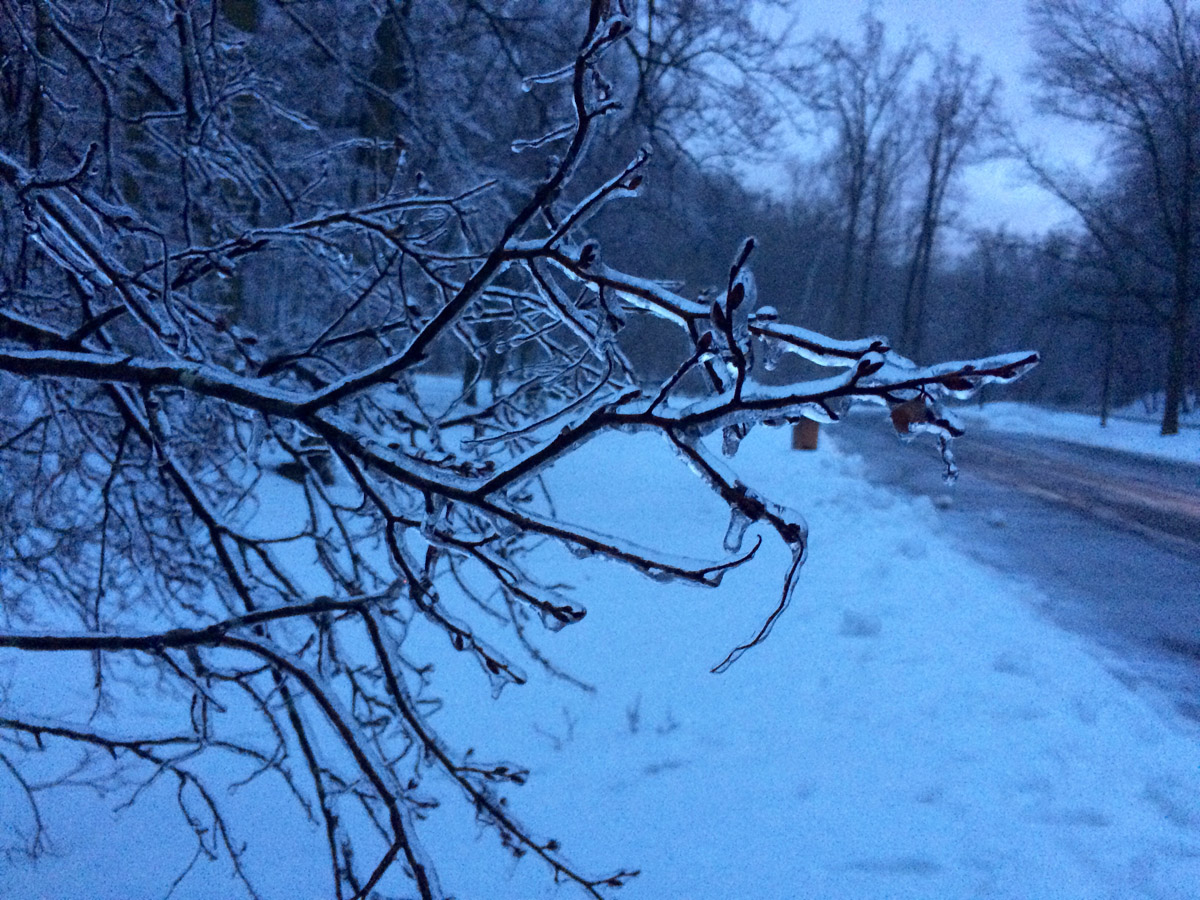 Tips to deal with ice-coated trees and downed limbs