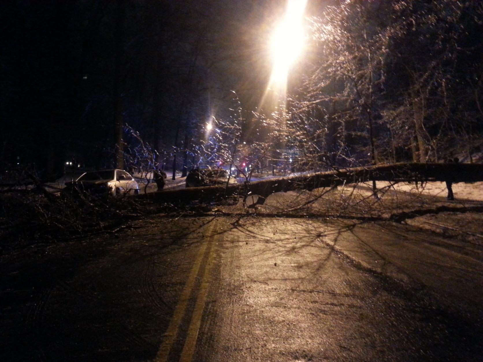 The fallen tree was blocking Massachusetts Avenue near Macomb Street in NW D.C. (WTOP/Rahul Bali)