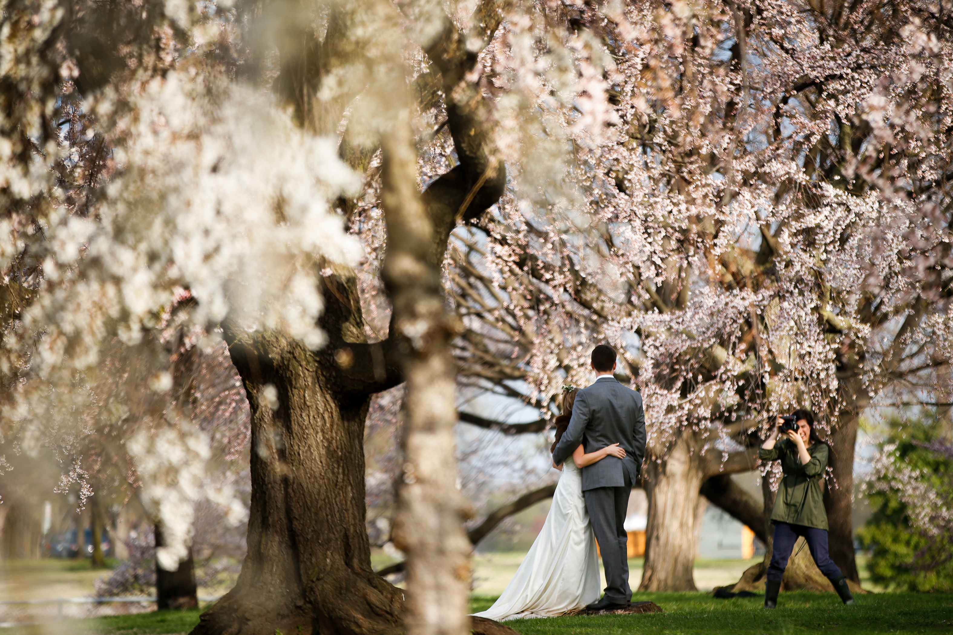 Photos: Cherry Blossoms 2015