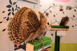 Japan has moved beyond cats and has opened cafes with more exotic animals, such as reptiles, birds and goats. Here, food and travel writer Laura Hayes is at an owl cafe. (Courtesy Laura Hayes)