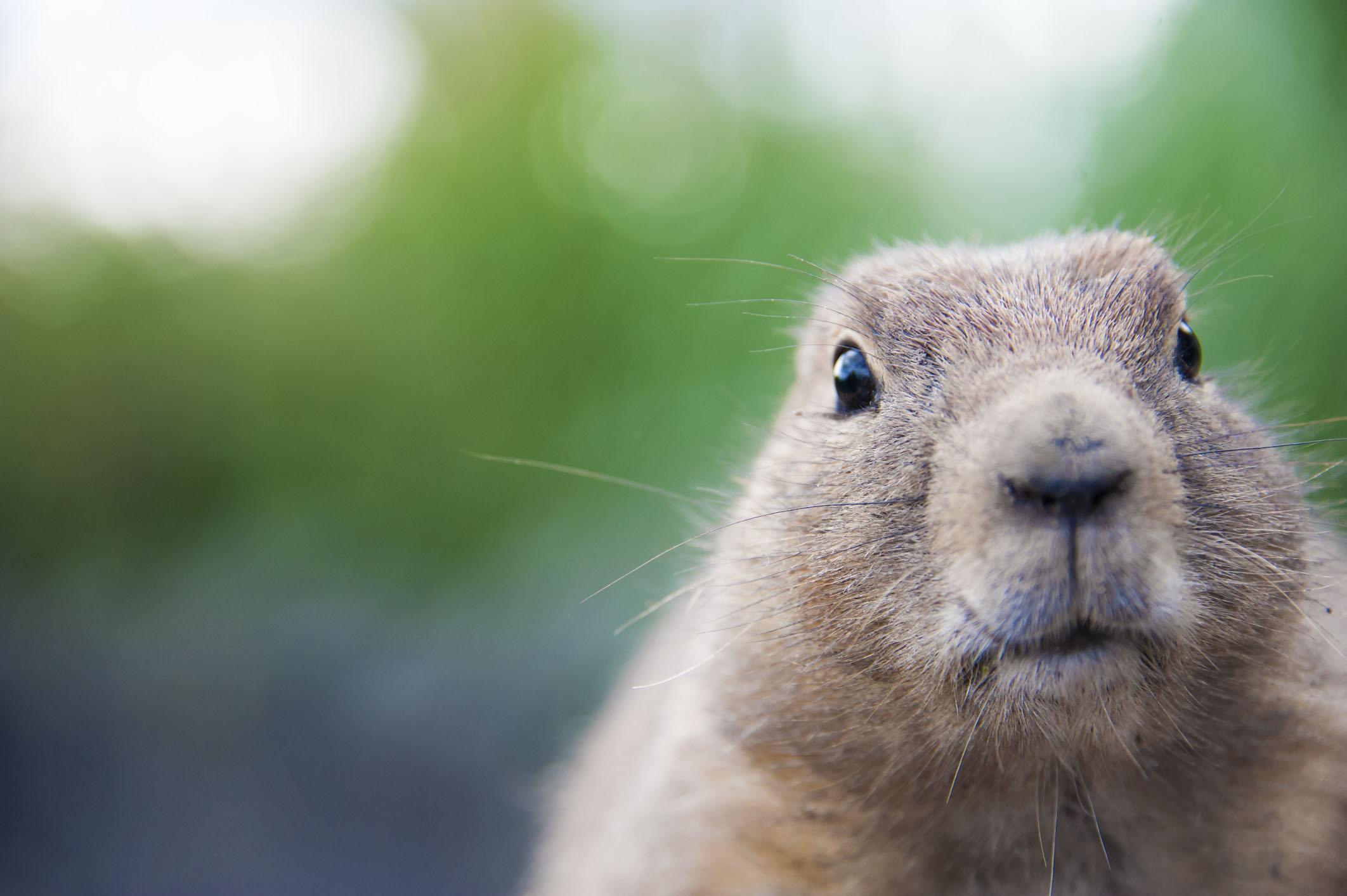 Garden Plot: Don't feed the ticks; send the woodchucks to Woodstock