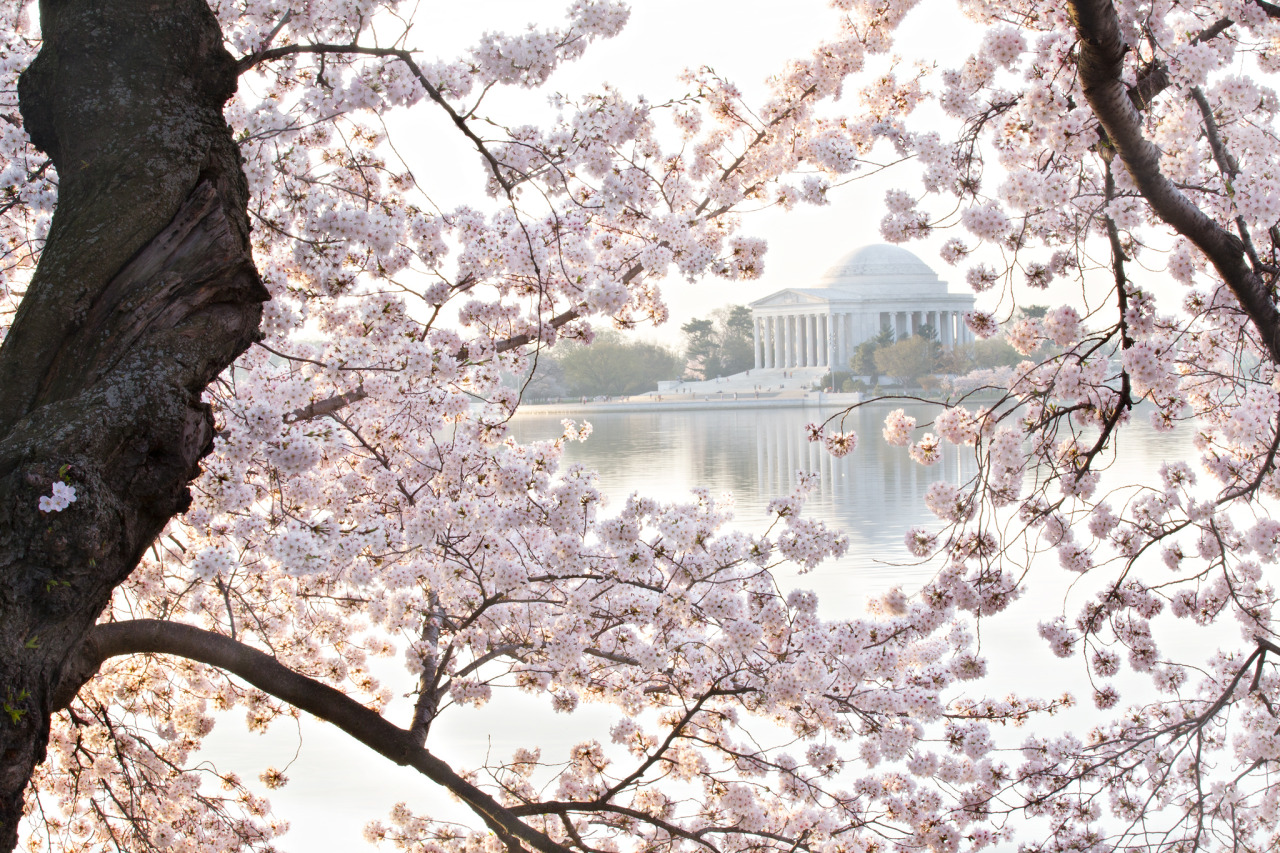 NPS Rangers offer free tours during Cherry Blossom Festival