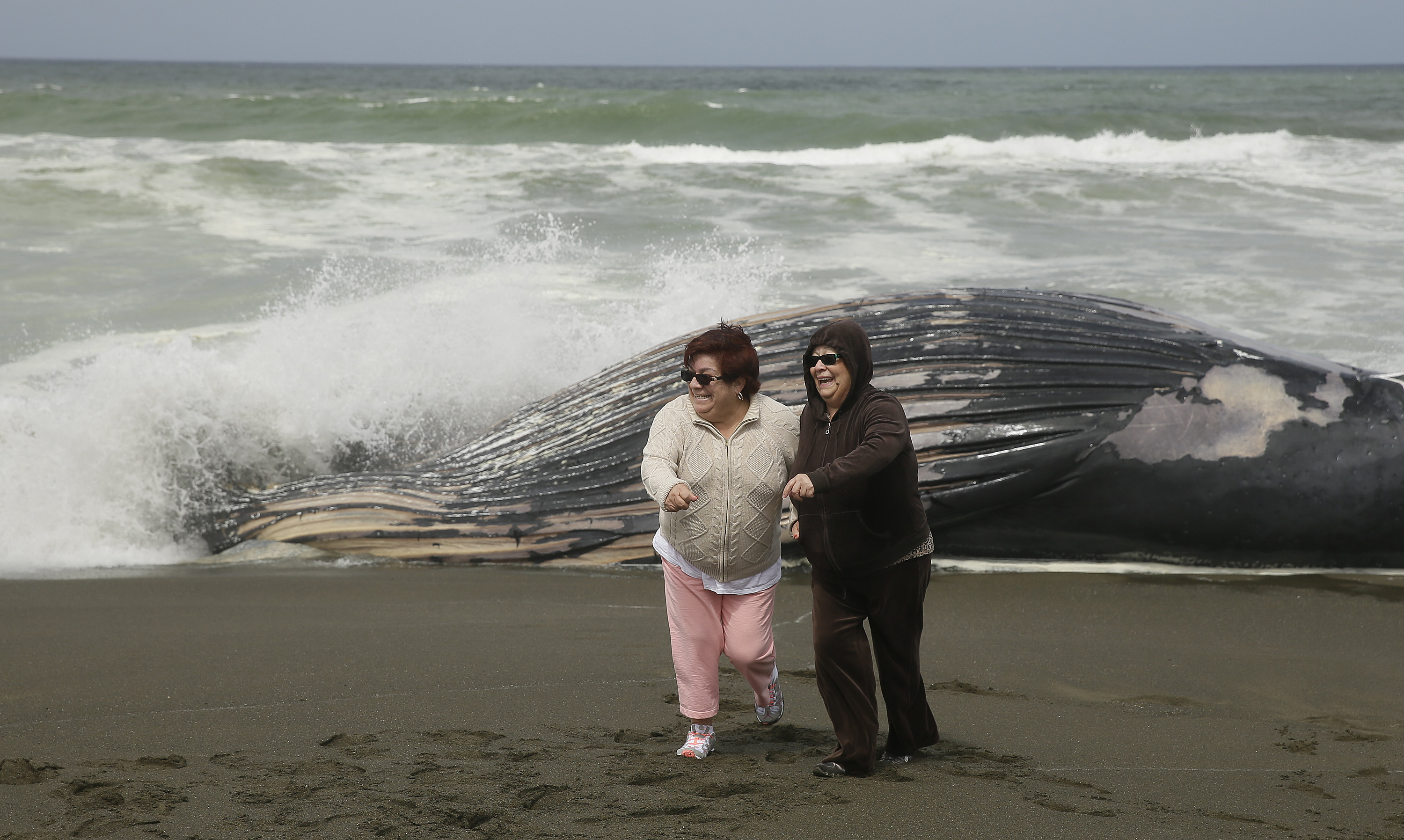 Second Beached Whale Found South Of San Francisco