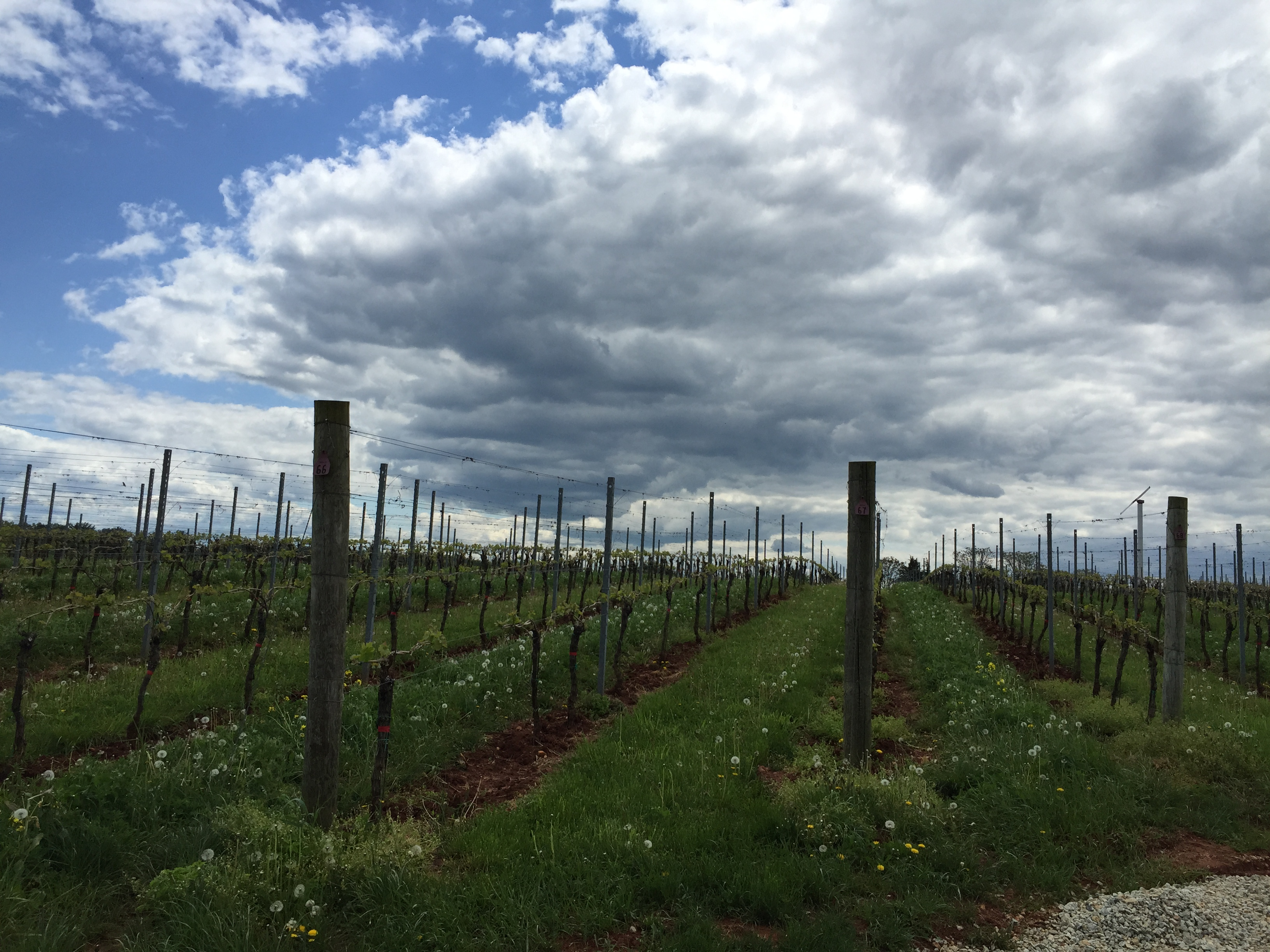 Va. governor addresses grape shortage in local wine industry