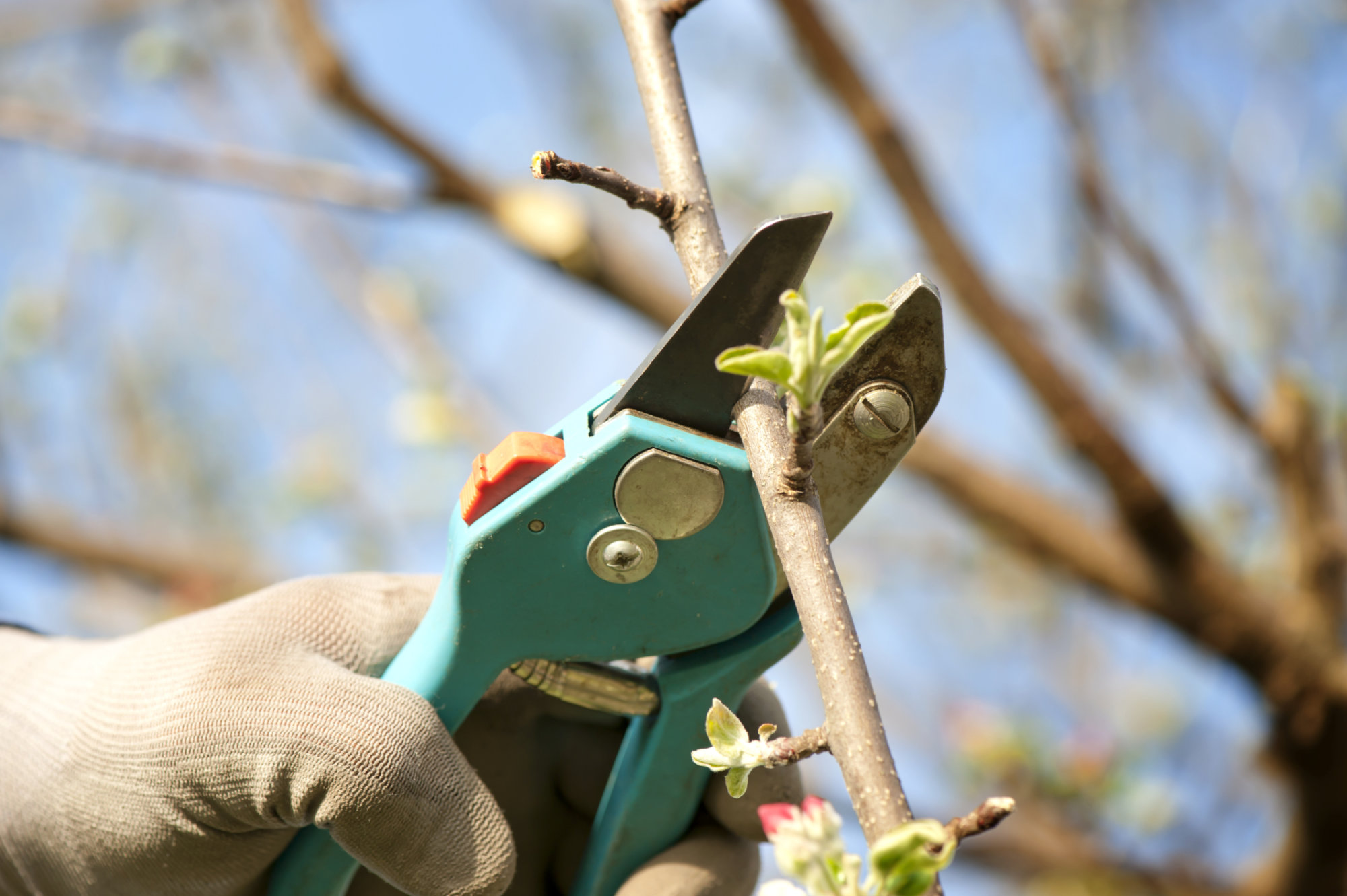 Garden Plot: Why you should stop pruning