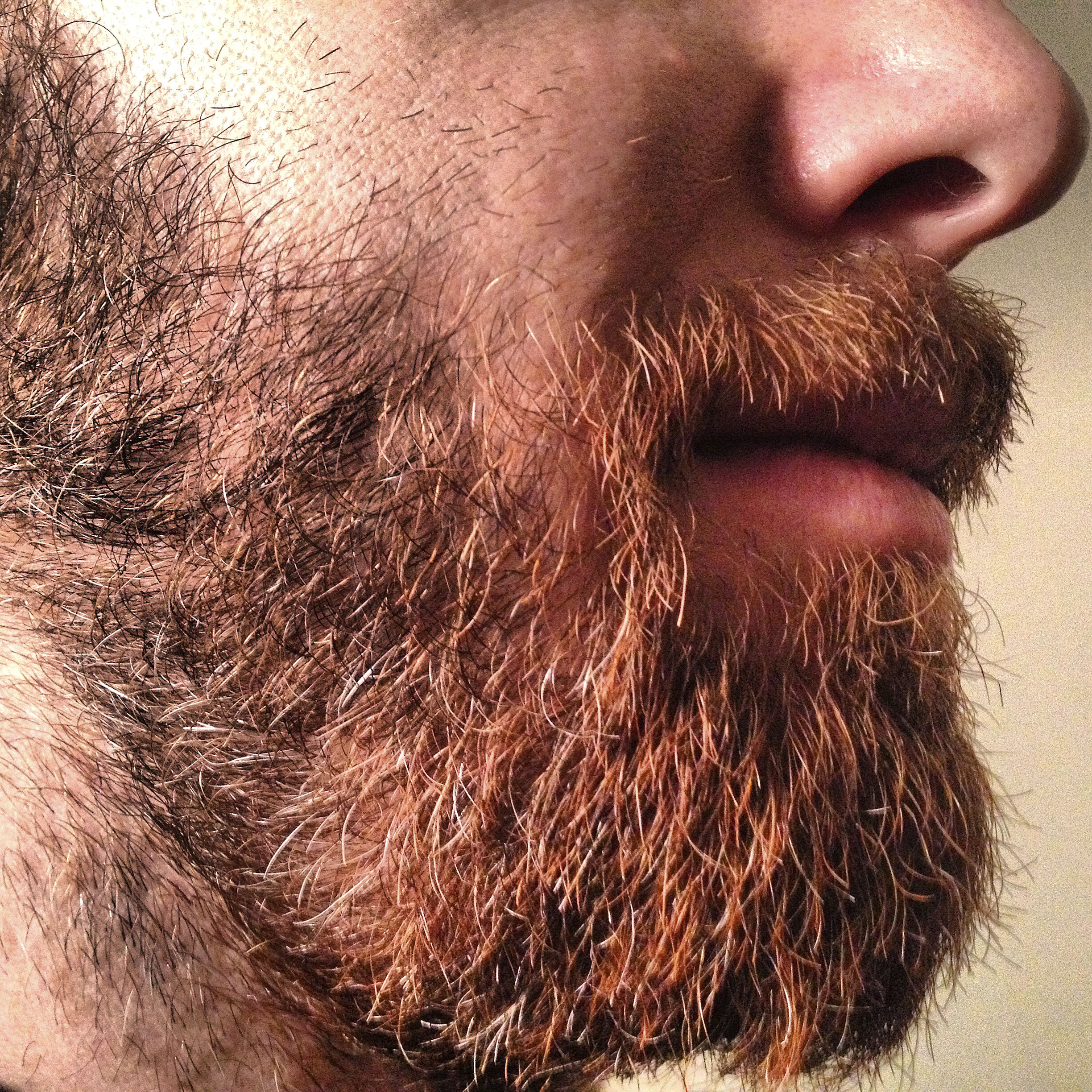 Microbiologist's tests show beards are full of fecal bacteria