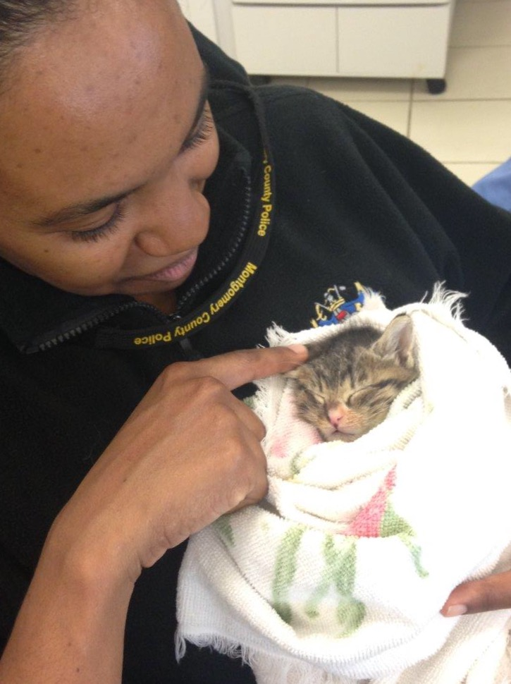 Joice Hourihan helps to nurse a kitten. (Photos provided by Katherine Zenzano,  MCASAC)