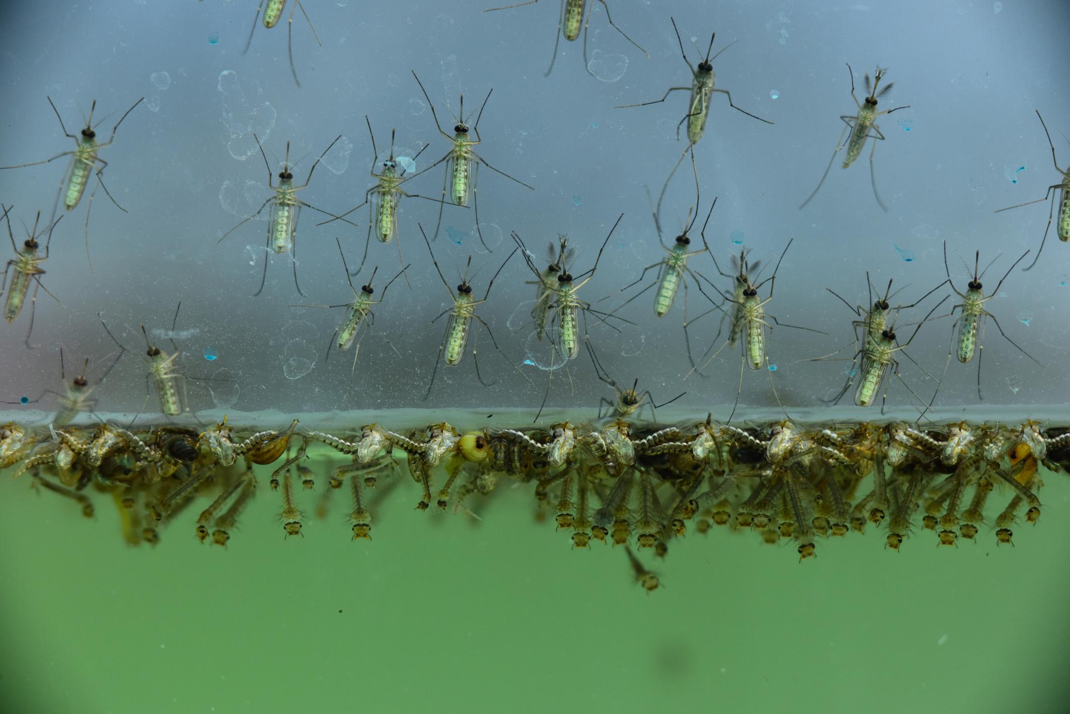Mosquito problems and preventative steps