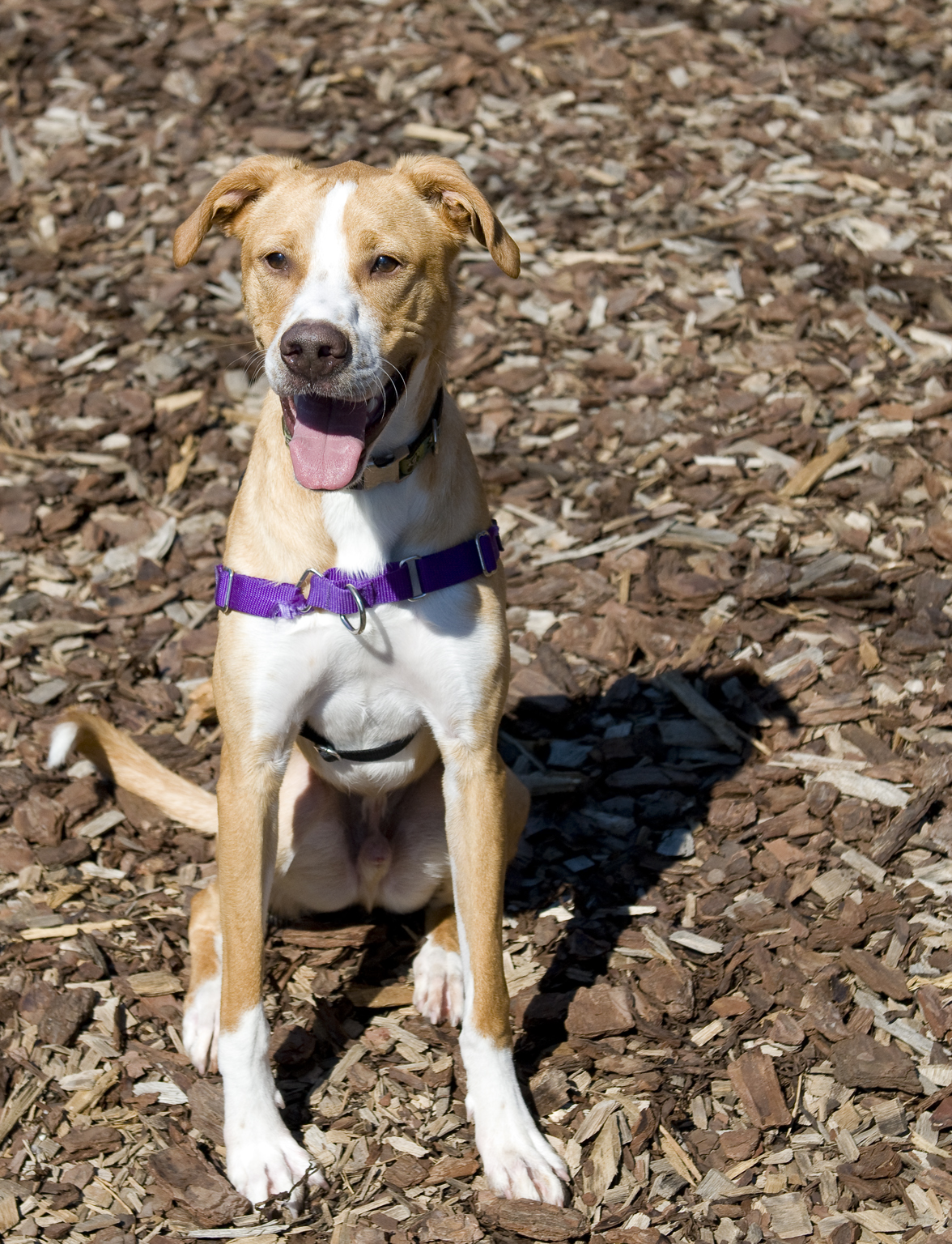 Pet of the Week: Belly Flop