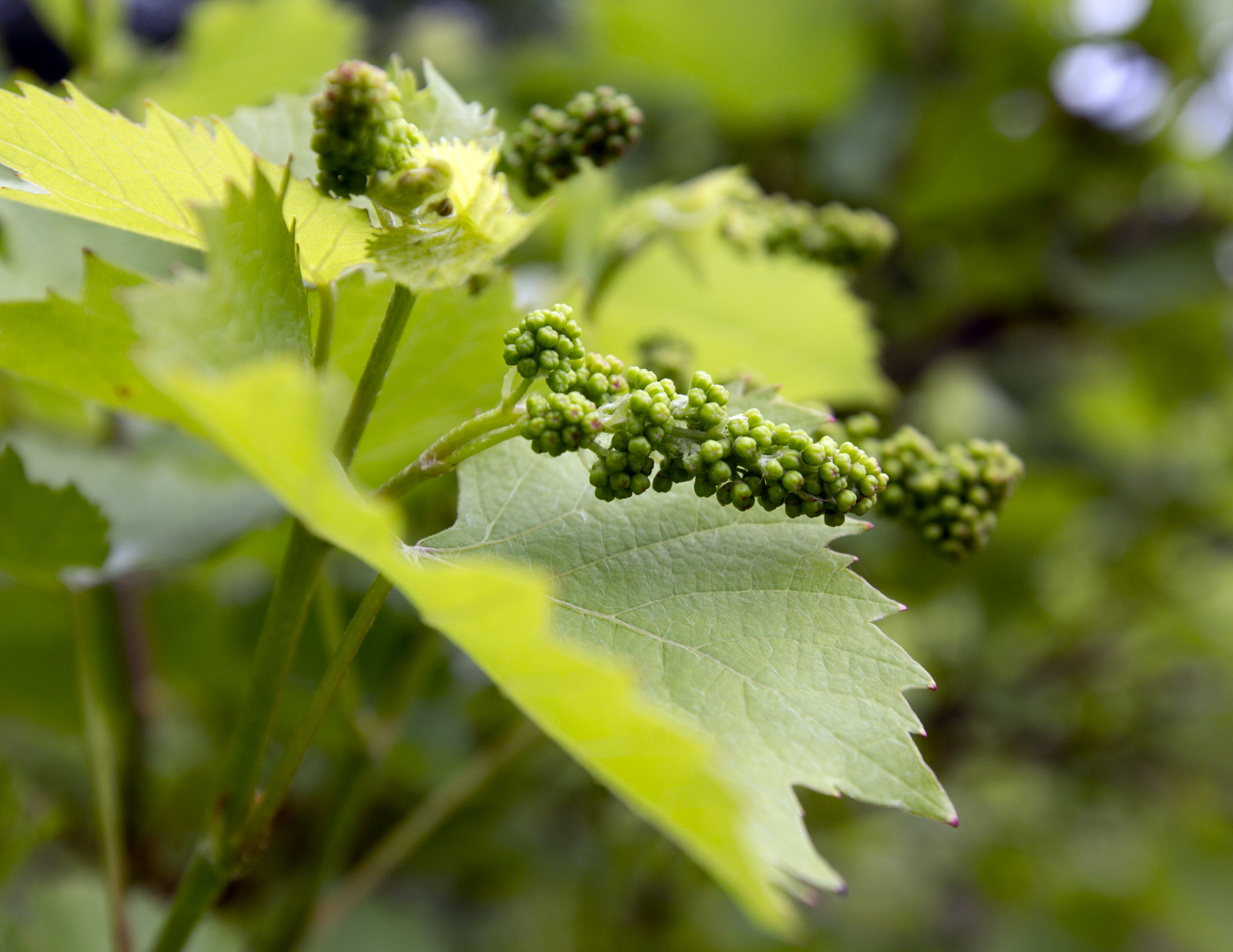 Garden Plot: What to do with grapevines and tree stumps