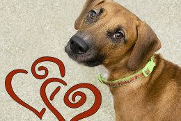 Queen of Hearts is available for adoption at the Washington Animal Rescue League. (Courtesy WARL)