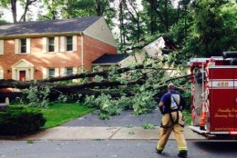 Two fallen trees damaged houses on Trotter Lane in Reston. (WTOP/Dave Dildine)