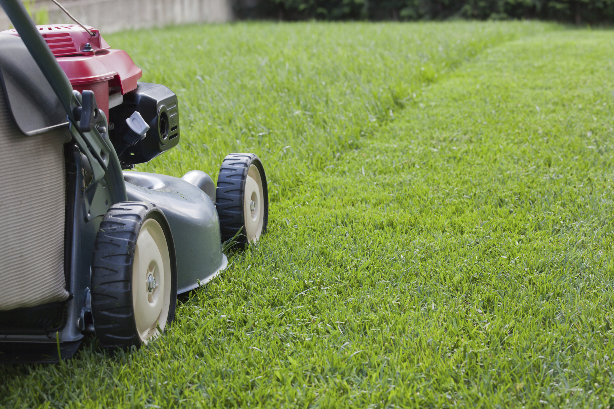 Garden Plot: Summer lawn care do's and don'ts