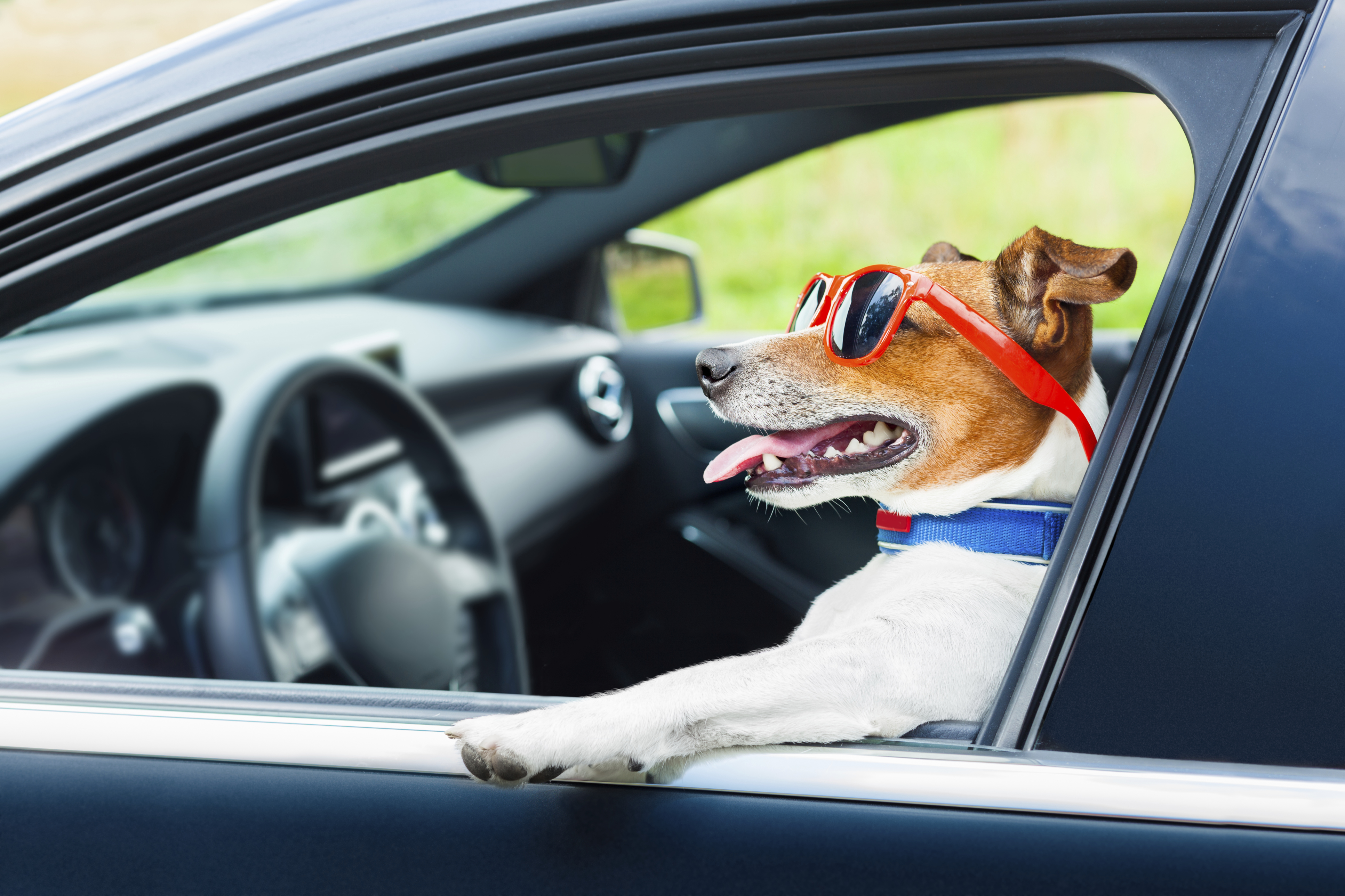 A purrfect summer vacation: Tips for traveling with your pet