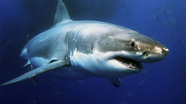 13-Year-Old Injured After Reported Shark Attack in North Carolina