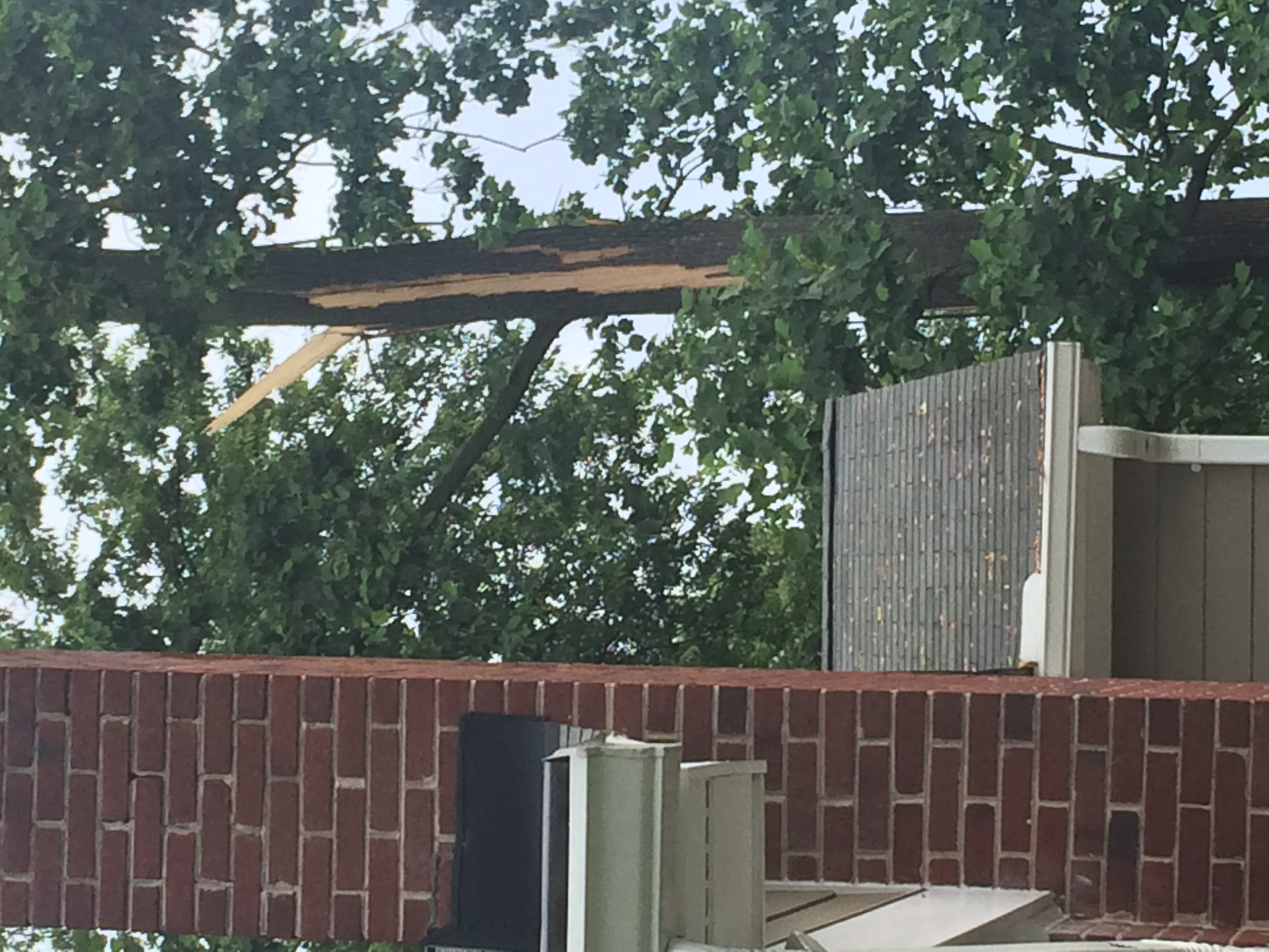 Lightning downs large tree in Silver Spring