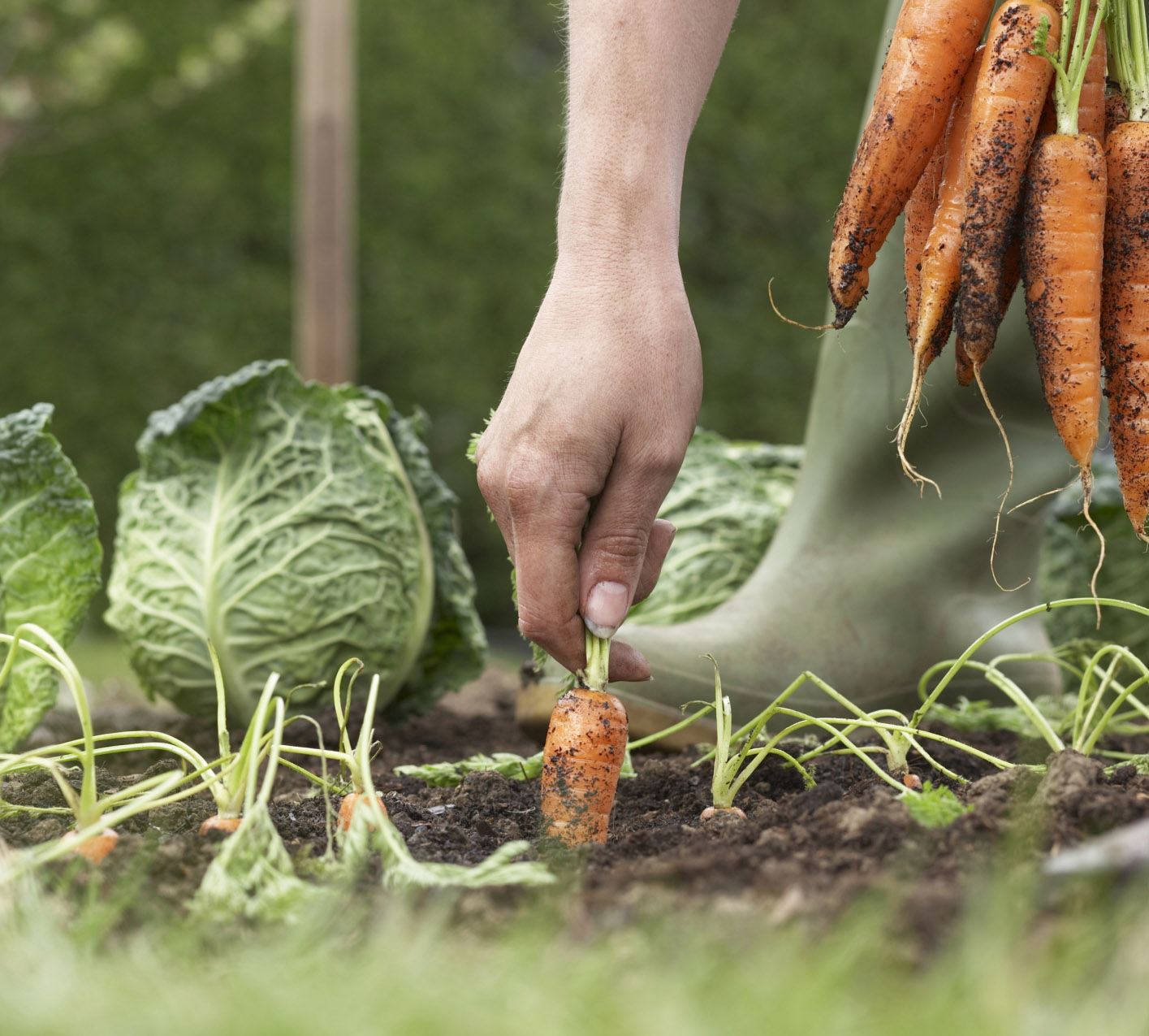 Spray paint, not plants: How to keep a vegetable garden weed- and pest-free