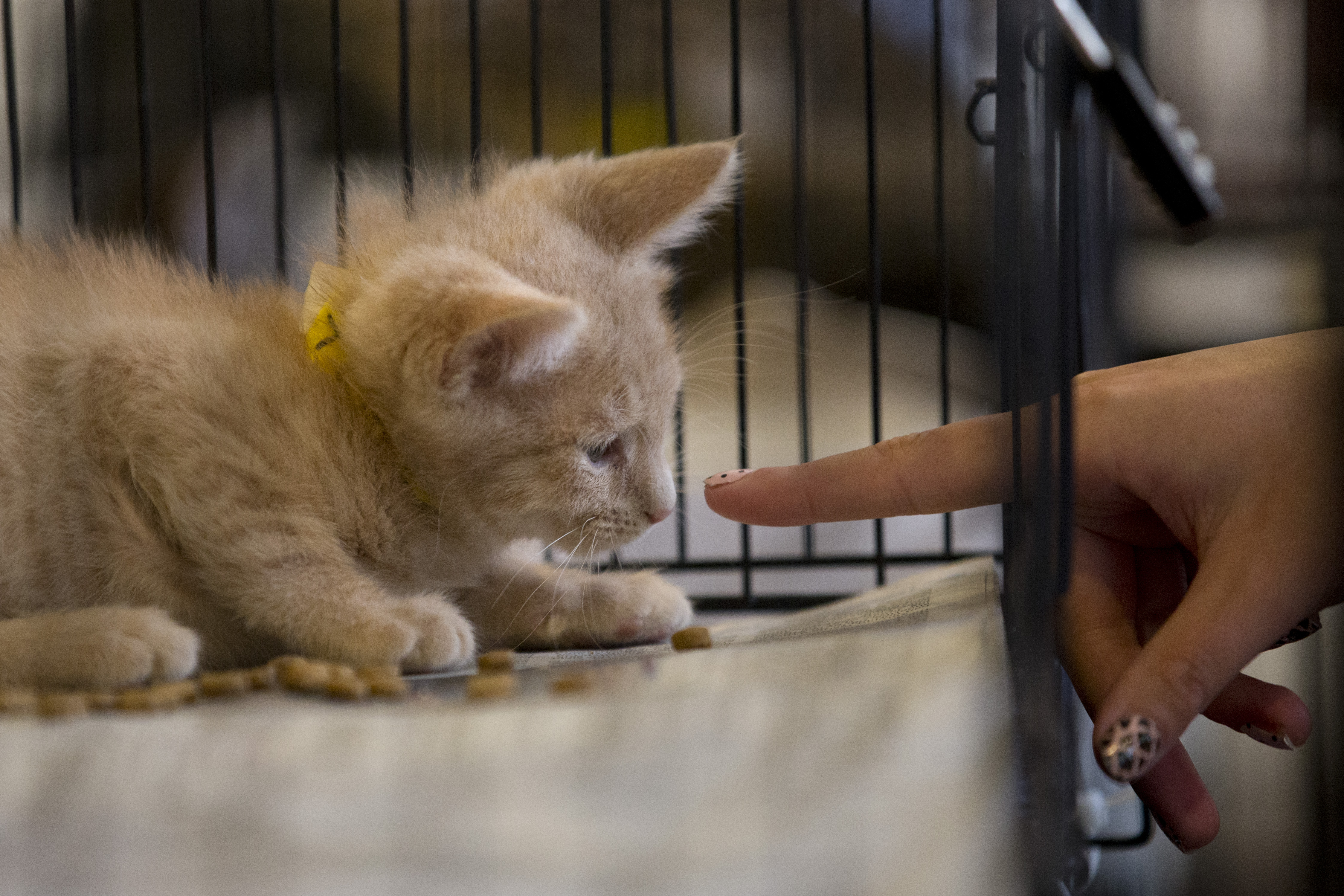 Hypoallergenic pets: An answer for animal lovers with allergies?