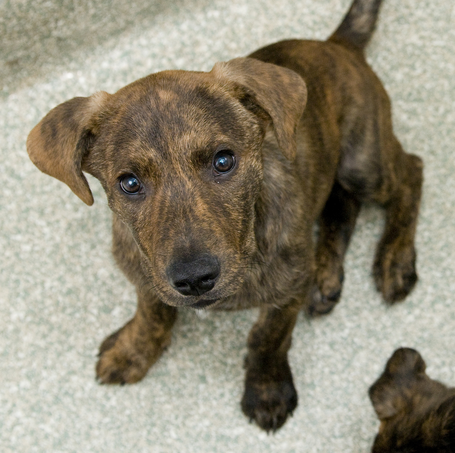Pet of the Week: Cashmere