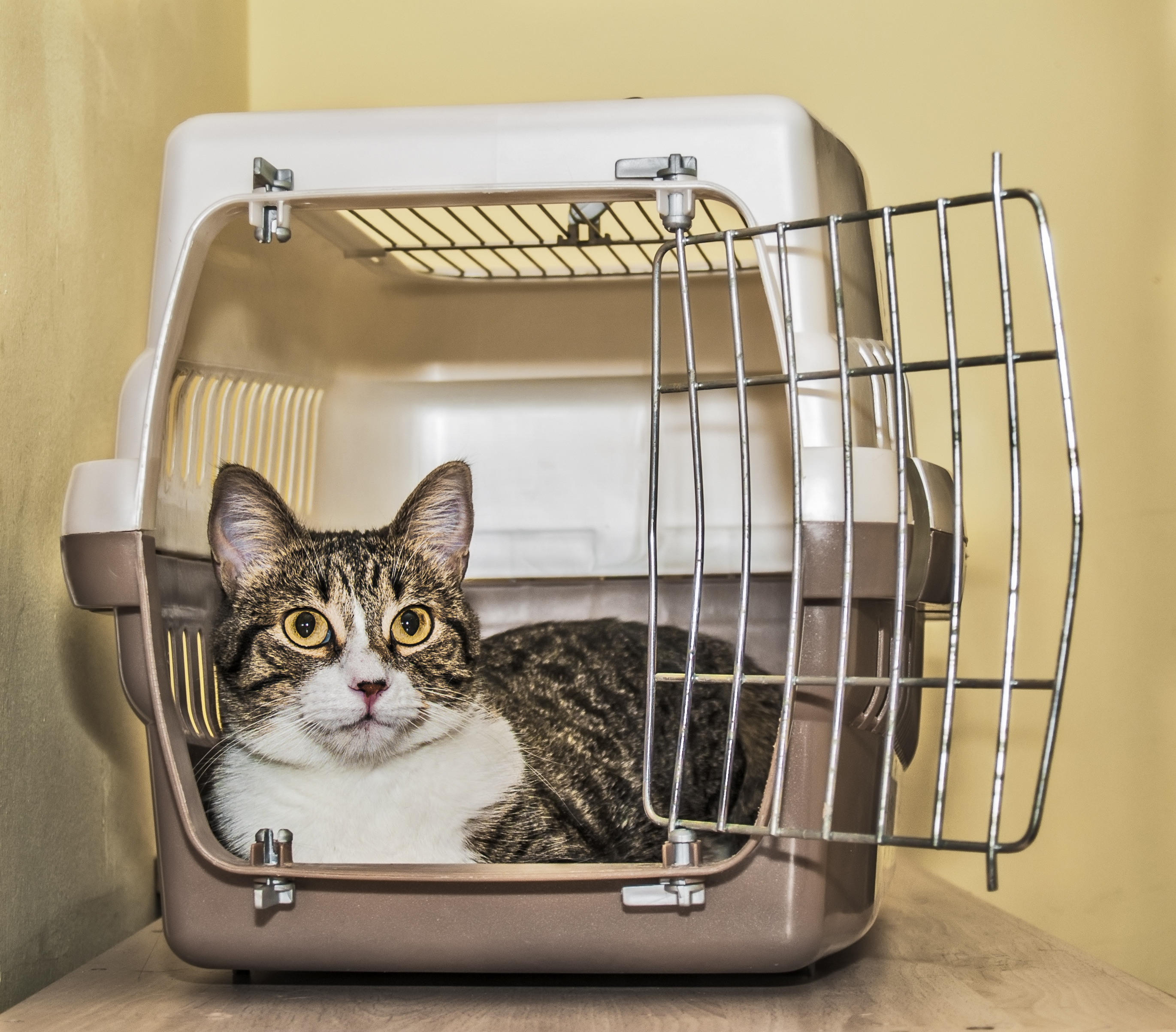 Pet travel crates, carriers tested for 'crashworthiness'