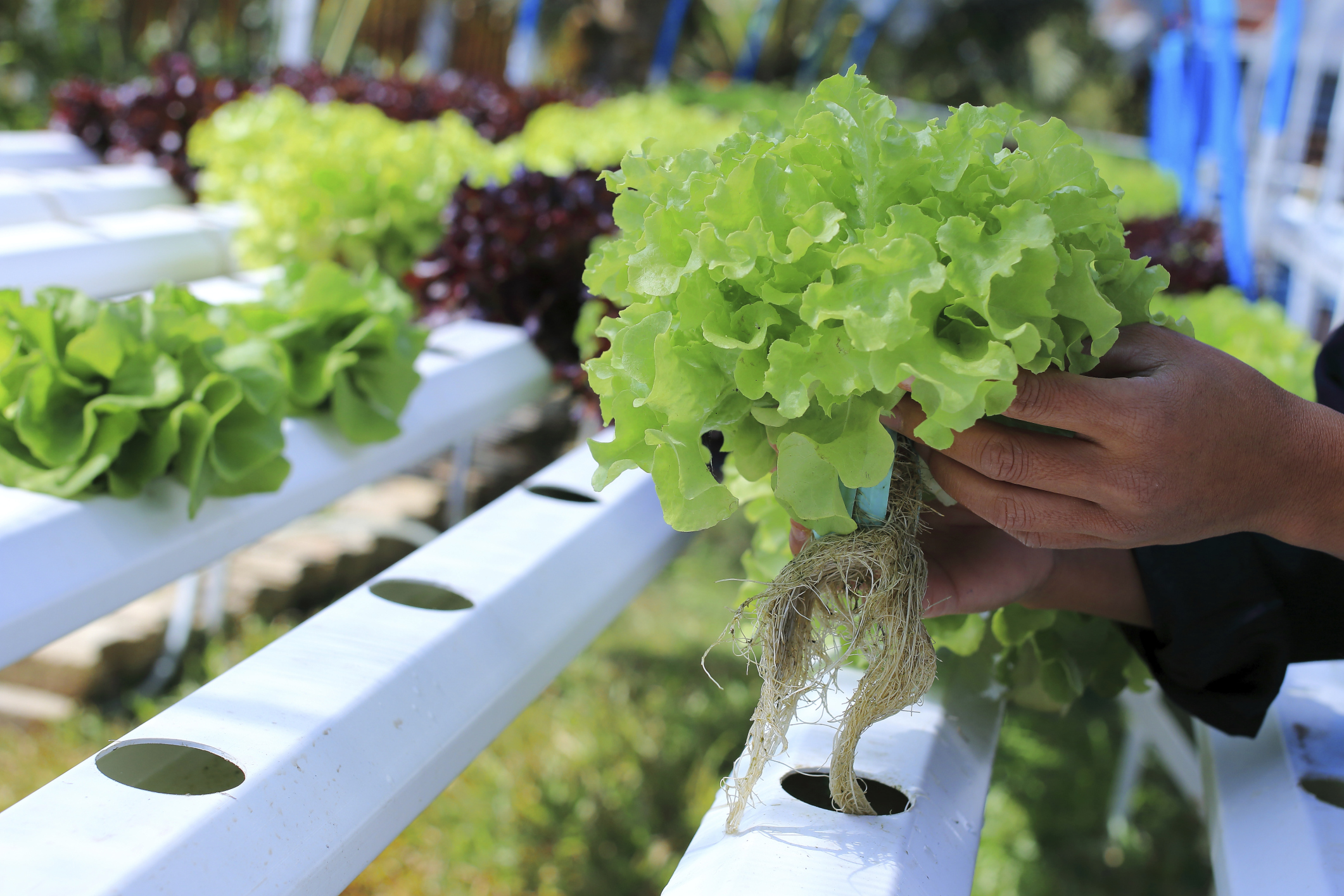 Portable farms take root as new use for shipping containers