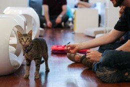 Since Crumbs & Whiskers opened its doors on June 20, it's adopted out 16 cats and a few kittens. (Courtesy Crumbs & Whiskers Facebook)