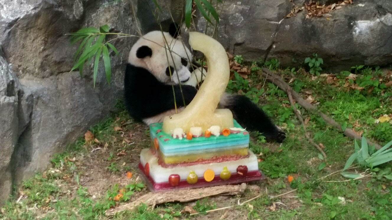 In other giant panda news: Bao Bao turns 2
