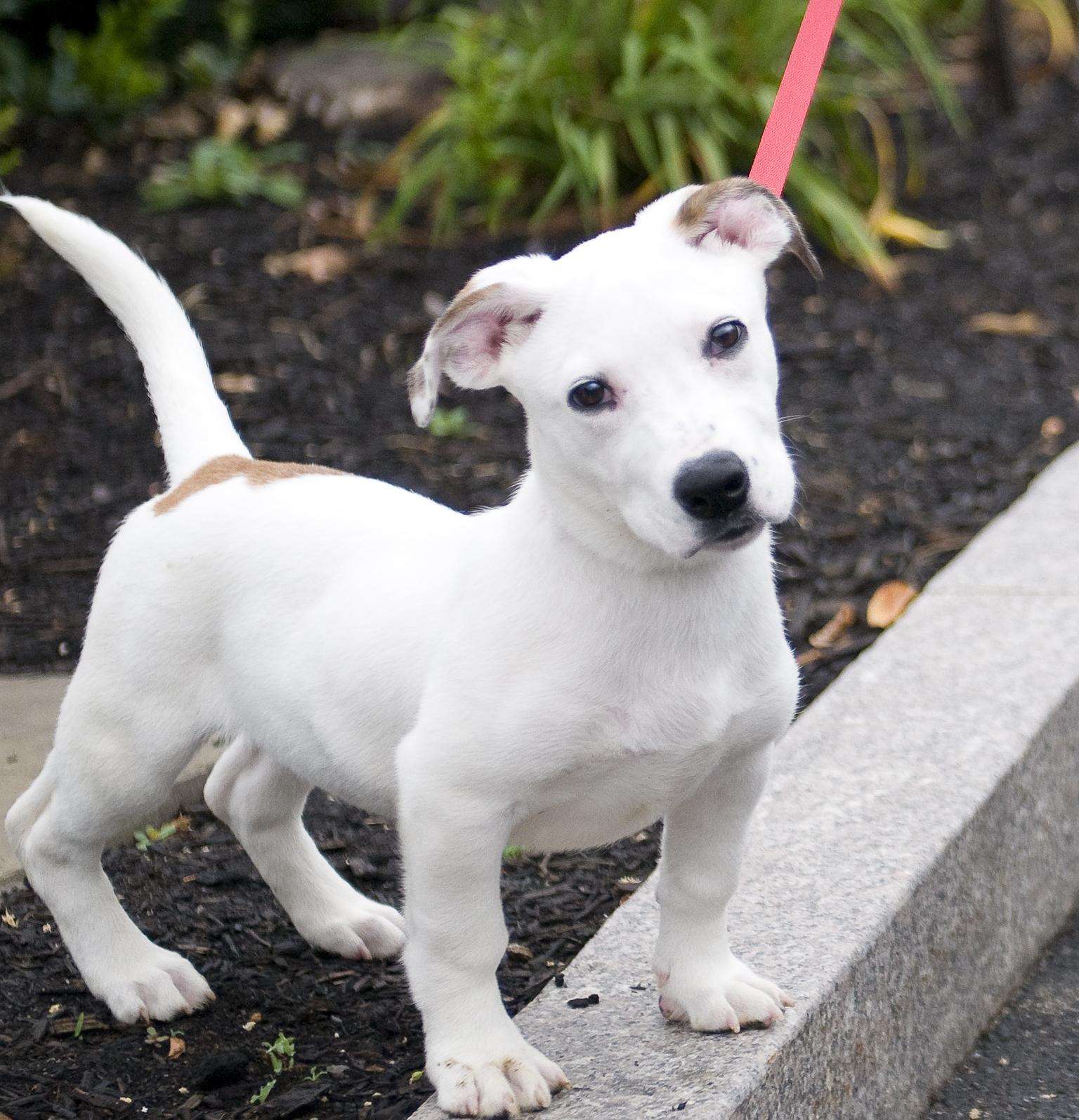 Pet of the Week: Dime