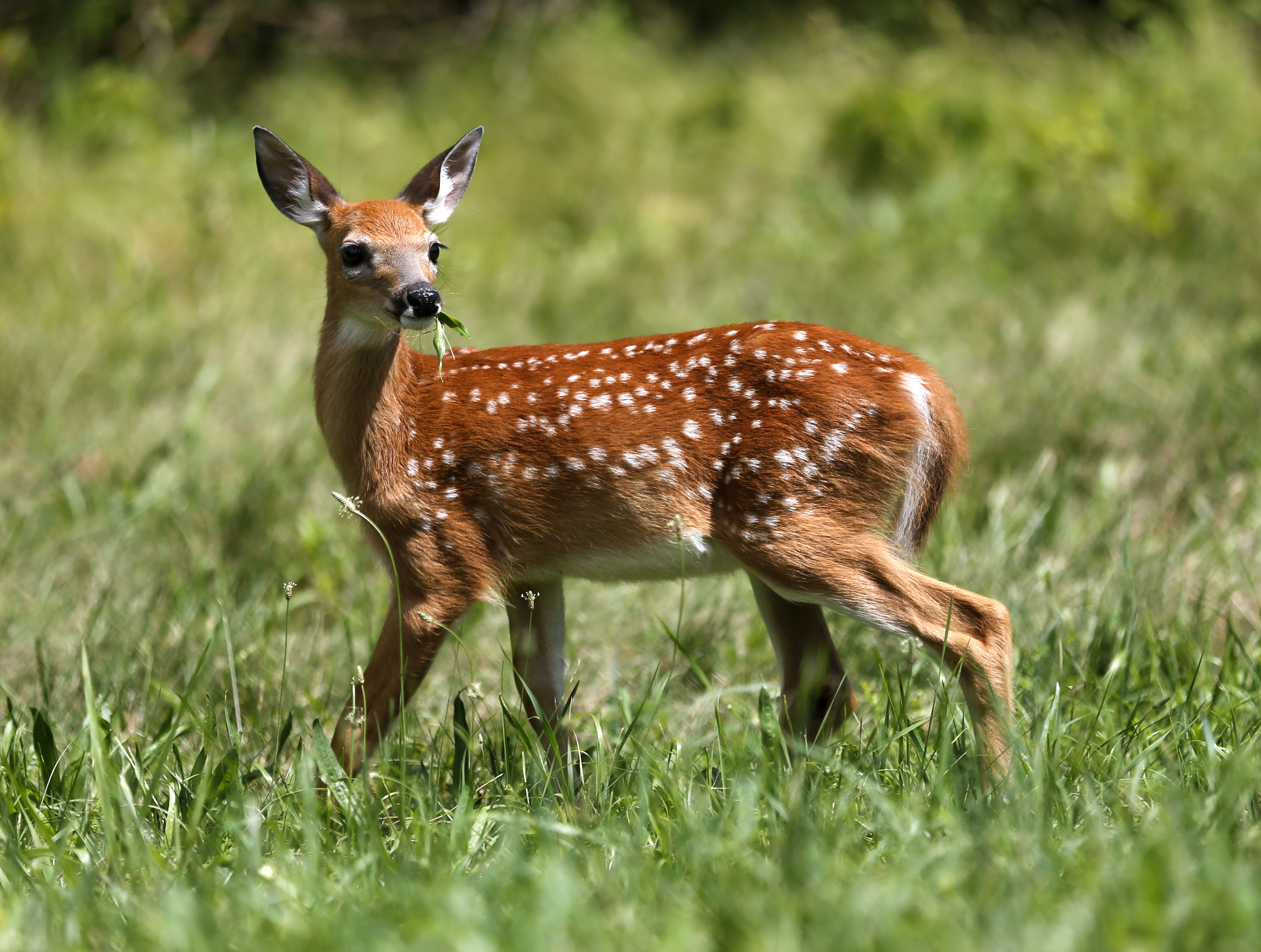 Garden Plot: Chiggers, poison ivy and those darn deer