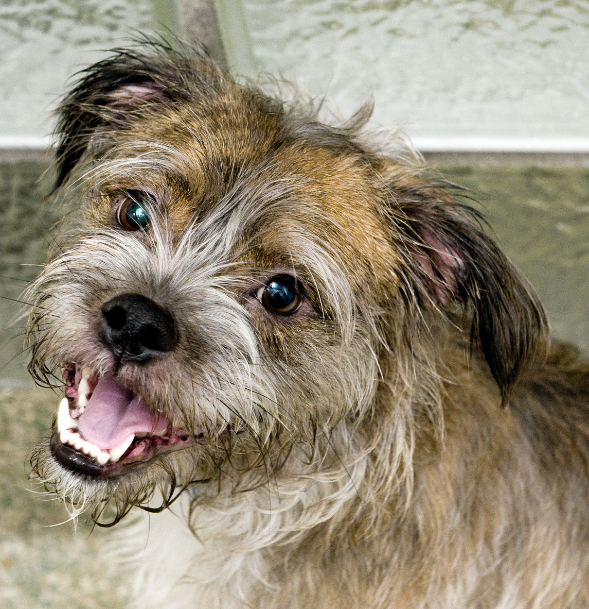 Parsons is available for adoption at the Washington Animal Rescue League. (Courtesy WARL)