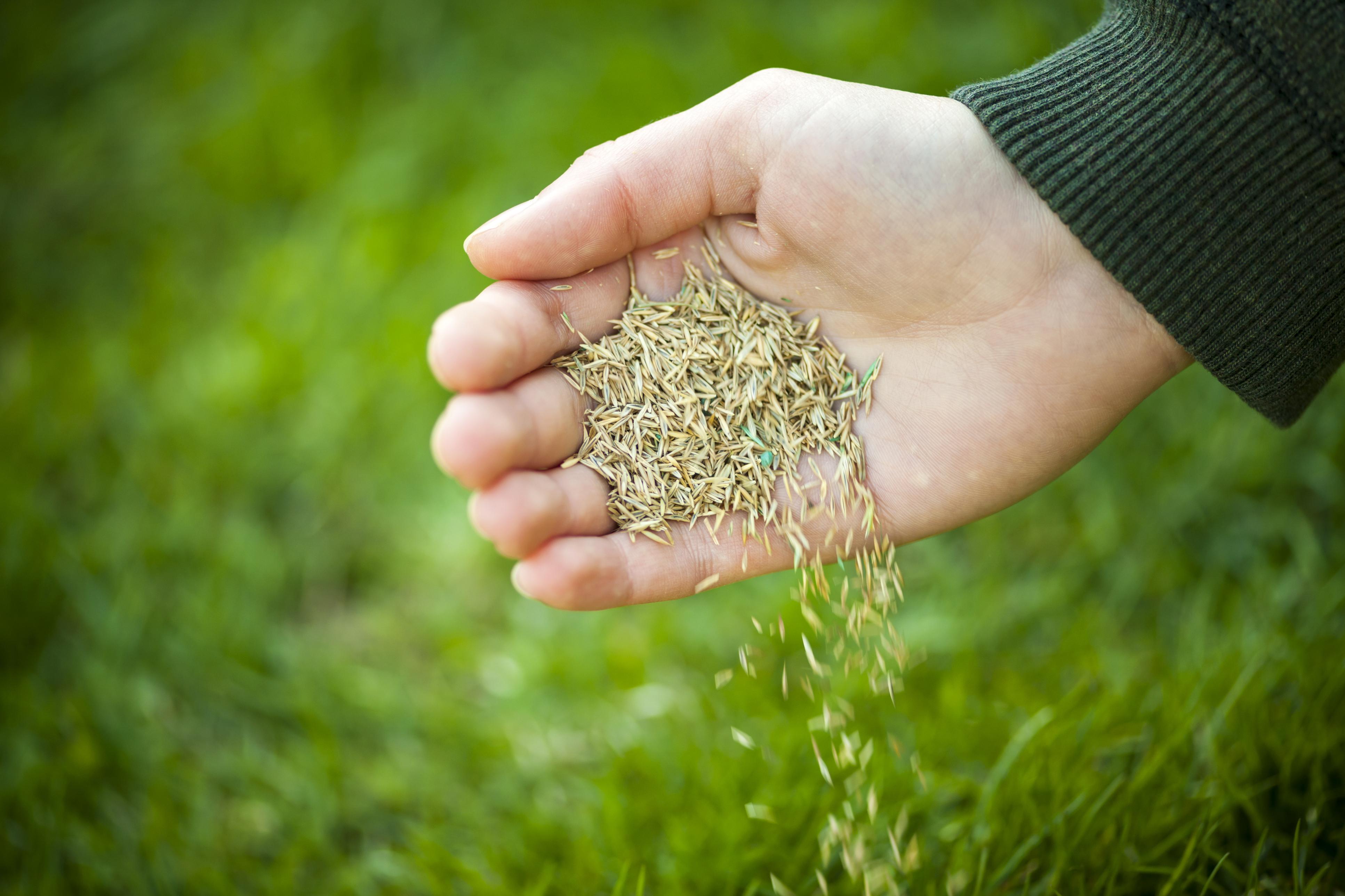Garden Plot: Lawnapalooza, seeding and grub control