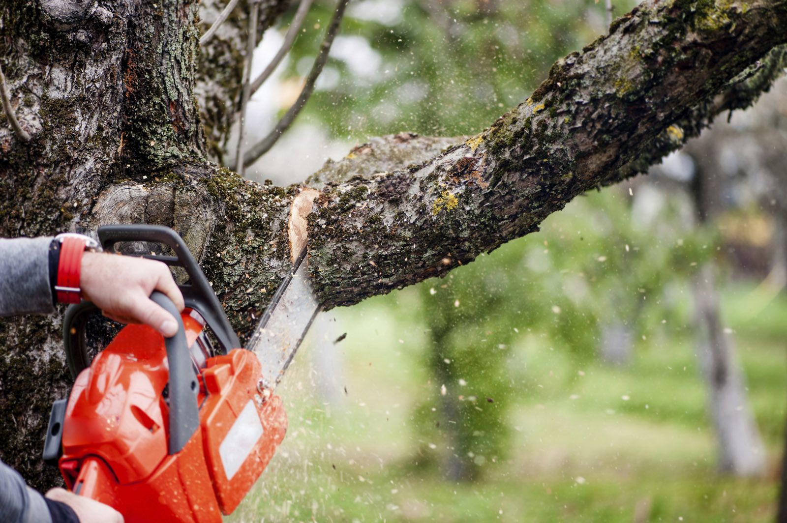 Cutting A Tree : The wrong time to trim trees wtop