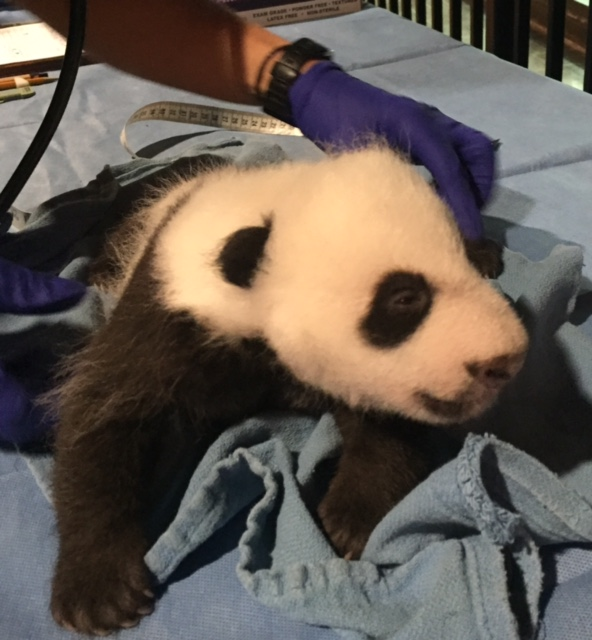 Bei Bei is doing well, according to checkup