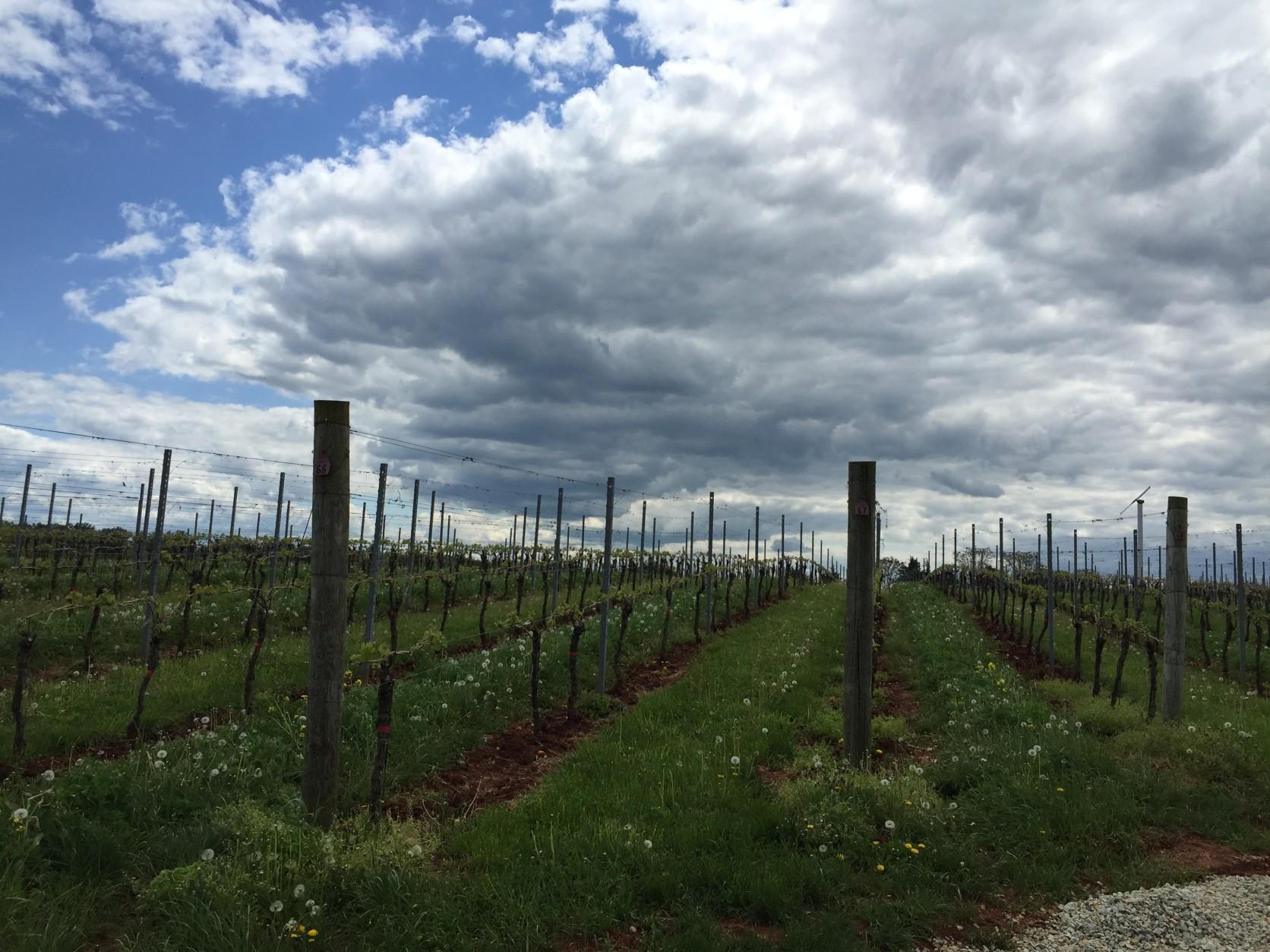 Steve Case's winery is a Wine Enthusiast finalist