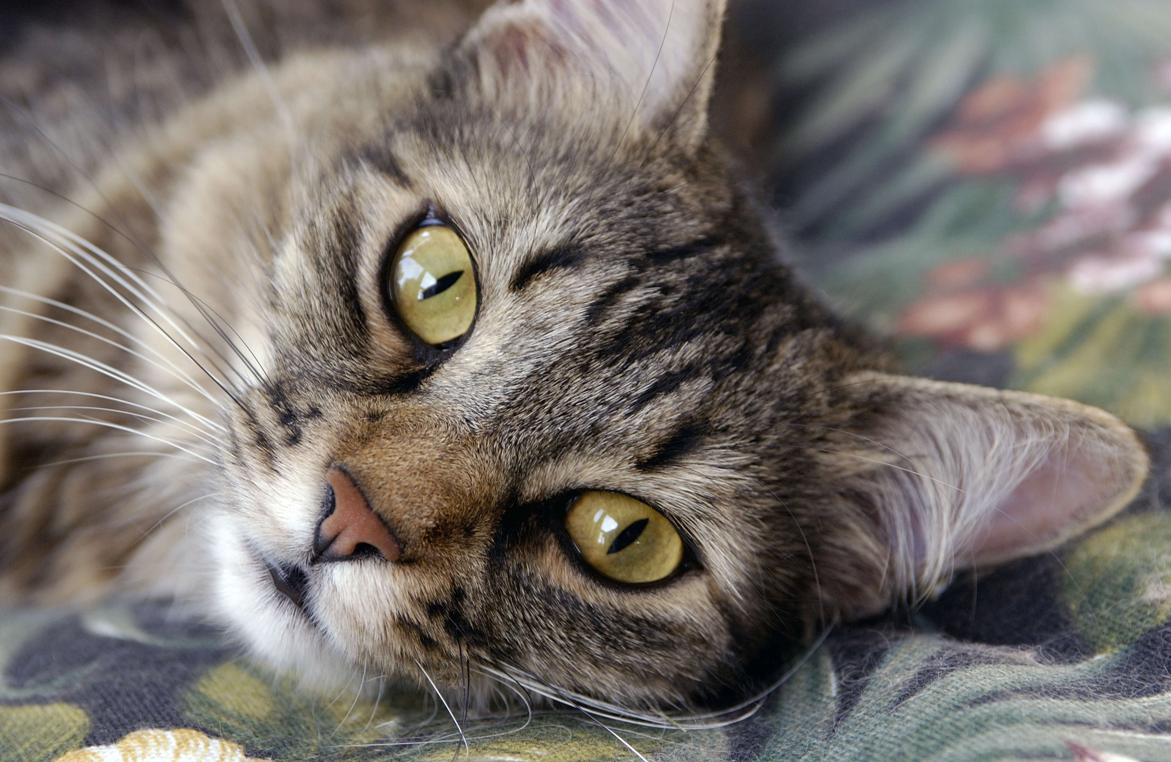Virus forces Prince William shelter to stop cat adoptions