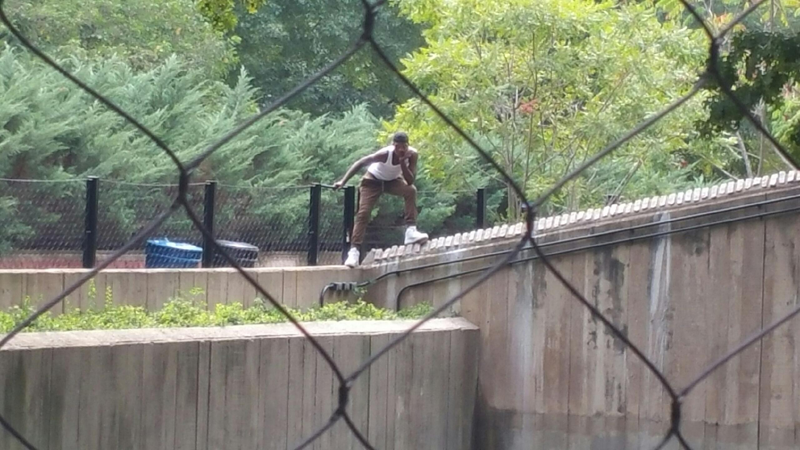 Man tries to enter National Zoo lions' den