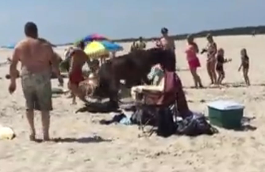 Assateague Island lifeguard kicked by horse (Video)