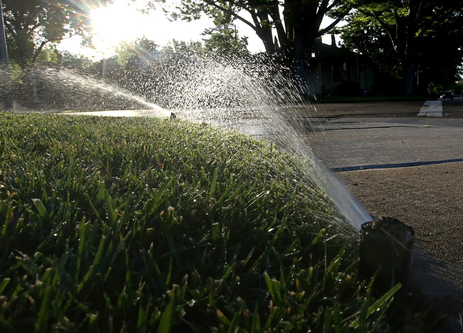 Staying hydrated: How to take care of your lawn, plants in blazing temps