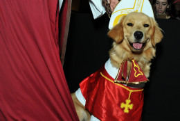 A papal puppy. (Shannon Finney Photography)
