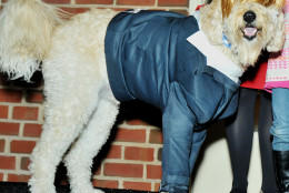 Doggy Donald Trump. (Shannon Finney Photography)