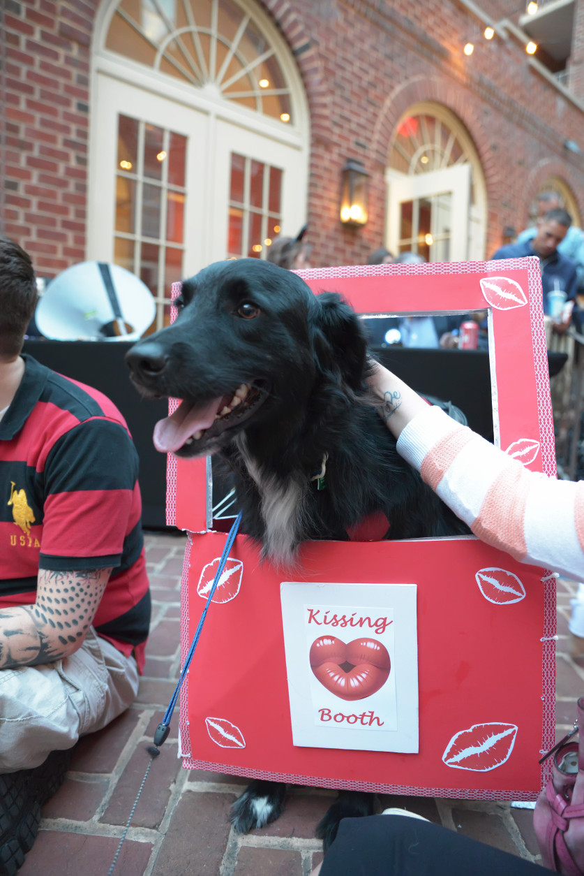 Roscoe the dog in his kissing booth. (Shannon Finney Photography)