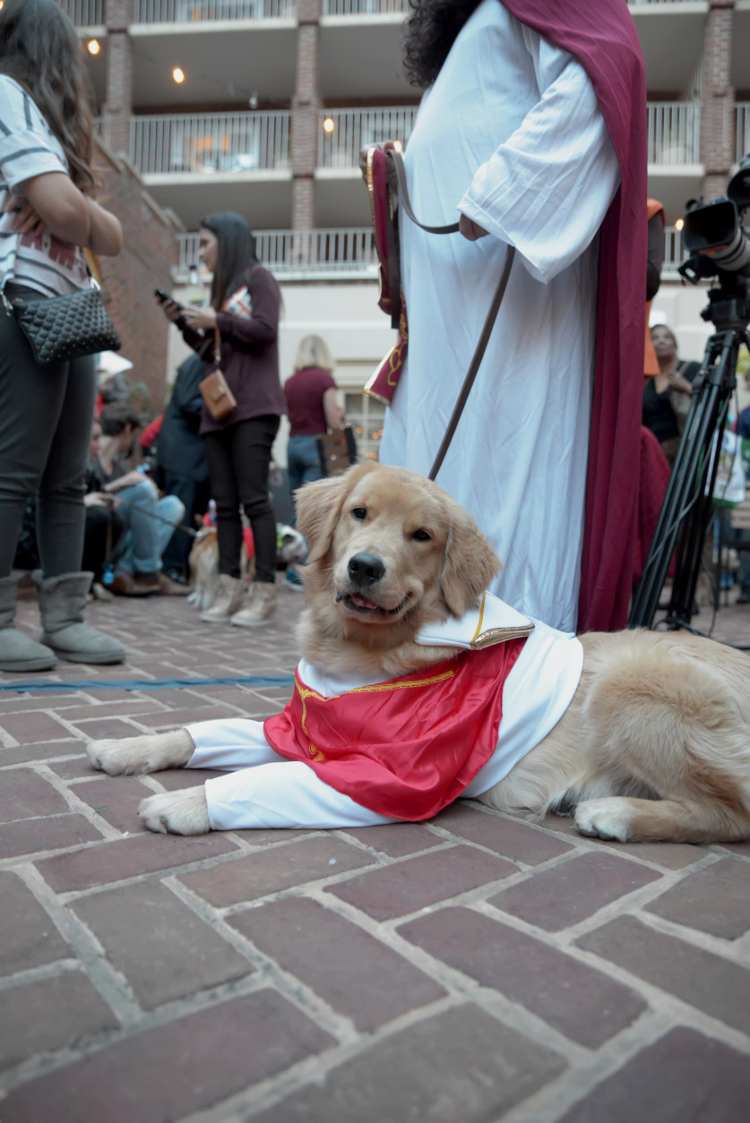 This papal pup was pooped. (Shannon Finney Photography)
