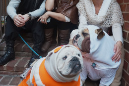 It's family picture time with doggie Luke and Leia, joined by their friends. (Shannon Finney Photography)
