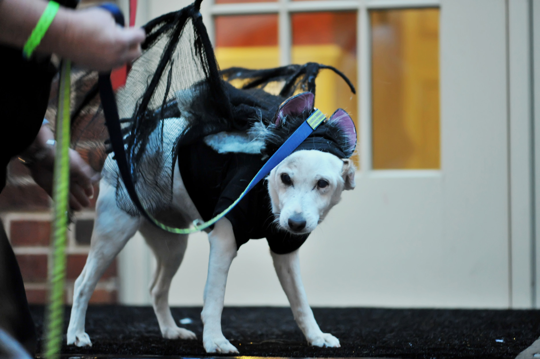 The winner for the spookiest costume was 16-year-old Bubbles, dressed as a vampire bat. (Shannon Finney Photography)