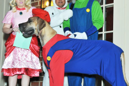 Stallone, a three-year-old Great Dane, dressed as Mario. (Shannon Finney Photography)